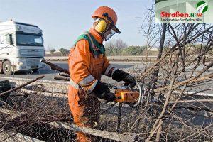 Baumpflege-Straßen-NRW